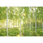 Fotografia ścienna SUNDAY 254 x 368 cm KOMAR
