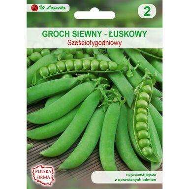 Groch siewny łuskowy SZEŚCIOTYGODNIOWY nasiona tradycyjne 50 g W. LEGUTKO