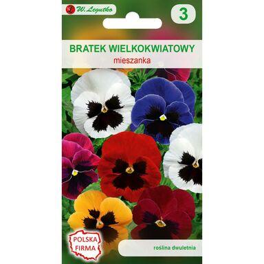 Bratek wielkokwiatowy MIESZANKA nasiona tradycyjne 0.5 g W. LEGUTKO