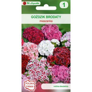 Nasiona kwiatów MIESZANKA Goździk brodaty o kwiatach pojedynczych W. LEGUTKO