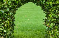 Krzewy i rośliny na żywopłot -  najlepsze rozwiązania