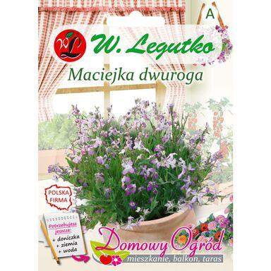 Nasiona kwiatów FIOLETOWA Maciejka dwuroga W. LEGUTKO