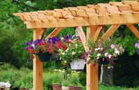 Pergola w ogrodzie: pierwsze kroki i wybór roślin