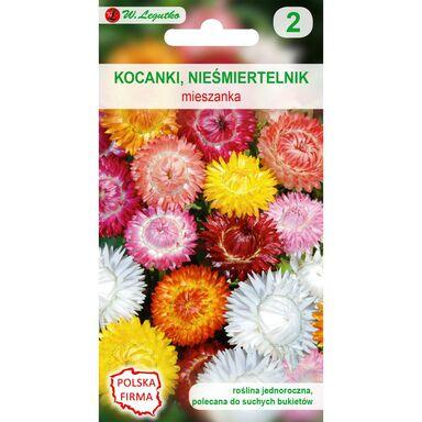 Nasiona kwiatów MIESZANKA Kocanki (Nieśmiertelnik) W. LEGUTKO