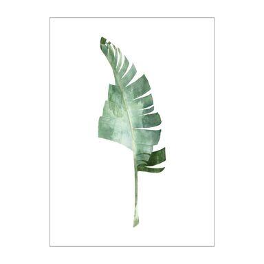 Obraz na pilśni Bananowiec 50 x 70 cm