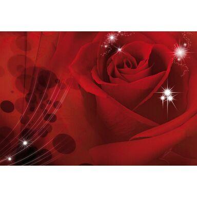 Fototapeta Róża 104 x 70 cm