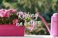 Rośliny na balkon – stwórz swoją oranżerię