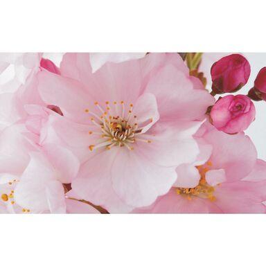 Fototapeta Kwiat Jabłoni 254 x 184 cm