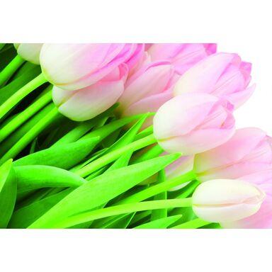 Fototapeta Tulipany 254 x 184 cm