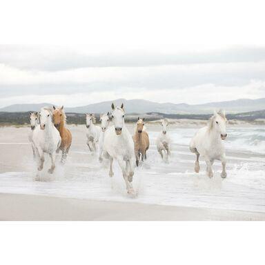 Fototapeta White Horses 368 x 254 cm Komar