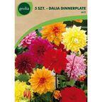Dalia Dinnerplate MIX 5 szt. cebulki kwiatów GEOLIA