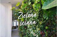 Zielona ściana – kreatywny sposób na ożywienie wnętrza i balkonu