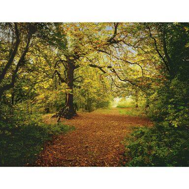 Fotografia ścienna AUTUMN FOREST 270 x 388 cm KOMAR
