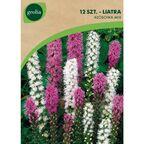 Liatra kłosowa MIX 12 szt. cebulki kwiatów GEOLIA