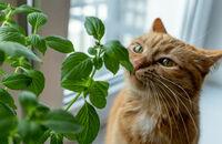Jakie rośliny są trujące dla kotów?