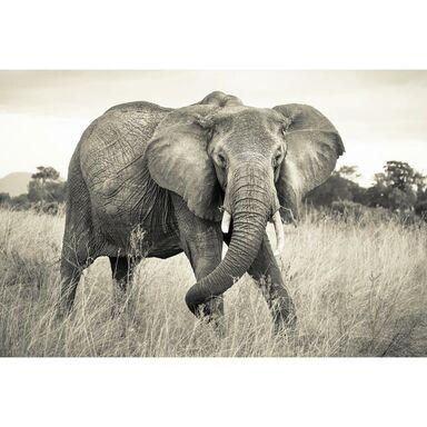 Fototapeta Elephant 368 x 248 cm Komar