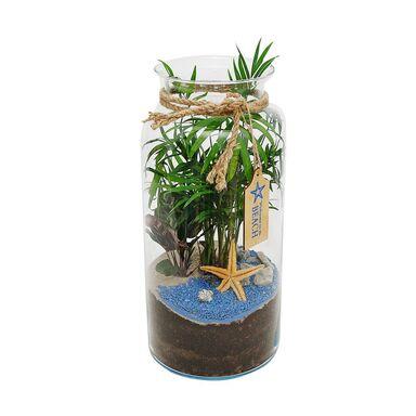 Rośliny zielone MIX w słoju tropikalnym 18 x 40 cm