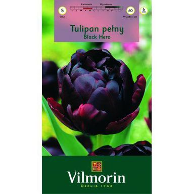Tulipan pełny późny BLACK HERO 5 szt. cebulki kwiatów VILMORIN