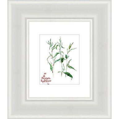 Obraz PERSICARIA HYDROPIPER 47.6 x 41.6 cm