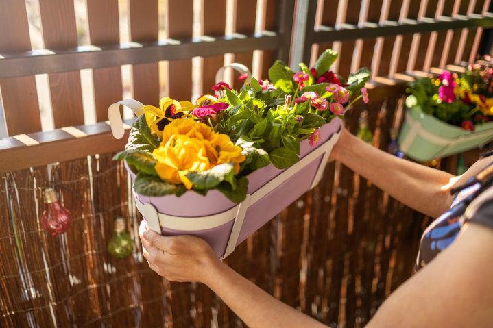 Młoda kobieta wieszająca na balustradzie balkonu doniczkę z kolorowymi kwiatami