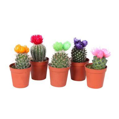 Kaktus dekorowany 10 cm MIX