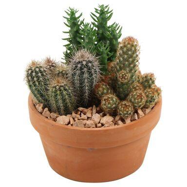 Kaktus Aranżacja w ceramice MIX 27 cm