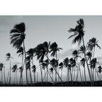 Kanwa Plaża Palmy 100 x 70 cm