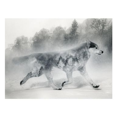 Kanwa WOLF NORDIC 100 x 75 cm