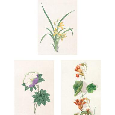 Zestaw 3 plakatów Rośliny 21 x 30 cm