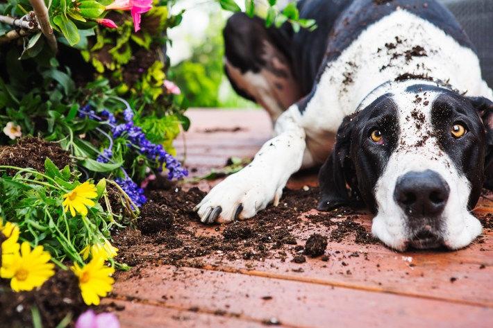Pies leżący obok kwiatków doniczkowych