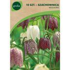 Szachownica kostkowata MIX 10 szt. cebulki kwiatów GEOLIA
