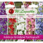 Groszek Pachnący kolekcja nasion tradycyjnych W.LEGUTKO