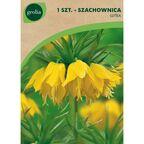 Szachownica cesarska LUTEA 1 szt. cebulki kwiatów GEOLIA