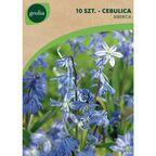 Cebulica syberyjska 10 szt. cebulki kwiatów GEOLIA