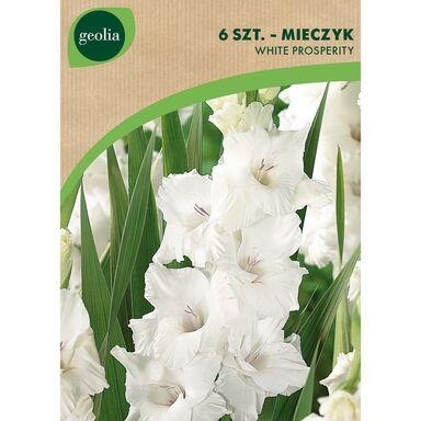 Cebulki kwiatów WHITE PROSPERITY Mieczyk 6szt. GEOLIA