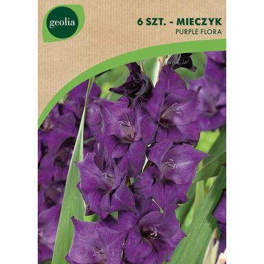 Cebulki kwiatów PURPLE FLORA Mieczyk 6szt. GEOLIA