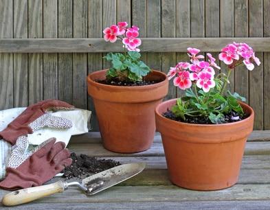 Pelargonie kwiaty idealne na balkon porady leroy merlin - Balkon bescherming leroy merlin ...