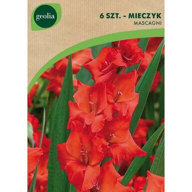 Cebulki kwiatów MASCAGNI Mieczyk 6szt. GEOLIA
