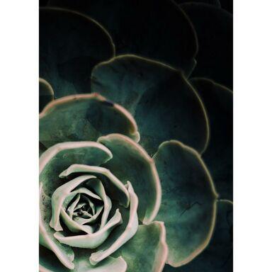 Obraz na metalu SUKULENTA 48 x 67.5 cm