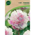 Piwonia CELEBRATION 1 szt. cebulki kwiatów GEOLIA