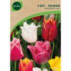 Tulipan strzępiasty MIX 5szt. GEOLIA