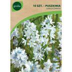 Puszkinia cebulicowata LIBANOTICA 10 szt. cebulki kwiatów GEOLIA