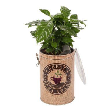 Kawa w ozdobnej puszce MIX 40 cm