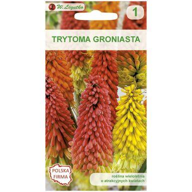 Trytoma (Knifofia) CZERWONO - ŻÓŁTA nasiona tradycyjne 0.1 g W. LEGUTKO