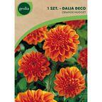 Dalia dekoracyjna BERLINER ORANGE 1 szt. cebulki kwiatów GEOLIA