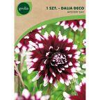 Dalia dekoracyjna MYSTERY DAY 1 szt. cebulki kwiatów GEOLIA