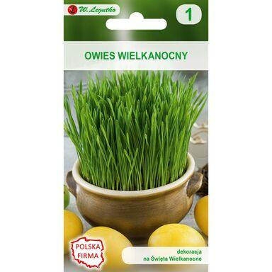 Owies wielkanocny nasiona tradycyjne 20 g W. LEGUTKO