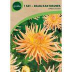 Dalia kaktusowa APRICOT STAR 1szt. GEOLIA
