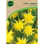 Narcyz botaniczny RIP VAN WINKLE 6 szt. cebulki kwiatów GEOLIA