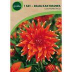Begonia strzępiasta ORANGE FUBUKI 1 szt. cebulki kwiatów GEOLIA